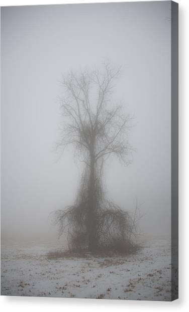 Foggy Walnut Canvas Print