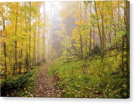 Nm Canvas Print - Foggy Winsor Trail Aspens In Autumn 2 - Santa Fe National Forest New Mexico by Brian Harig