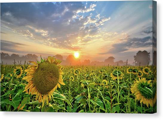 Foggy Yellow Fields Canvas Print
