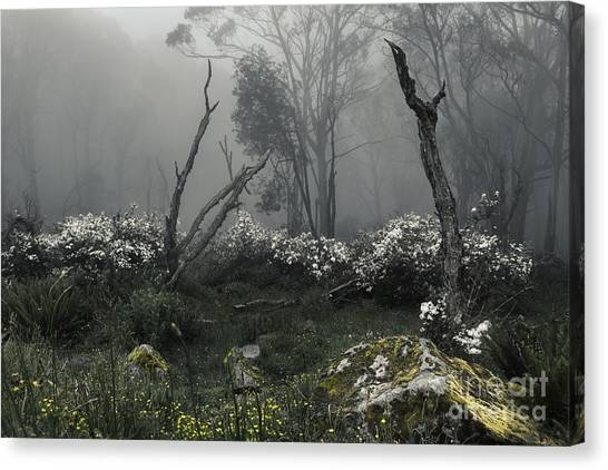 Petrified Forest Canvas Print - Fogscape by Andrew Paranavitana