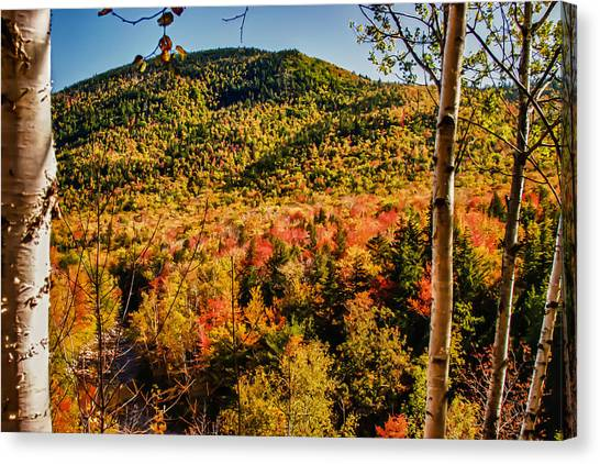 Foliage View From Crawford Notch Road Canvas Print