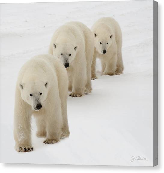 Bear Canvas Print - Follow The Leader by Joe Bonita