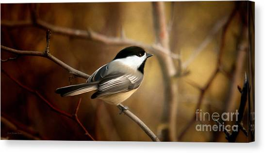 Following The Light Canvas Print by Beve Brown-Clark Photography