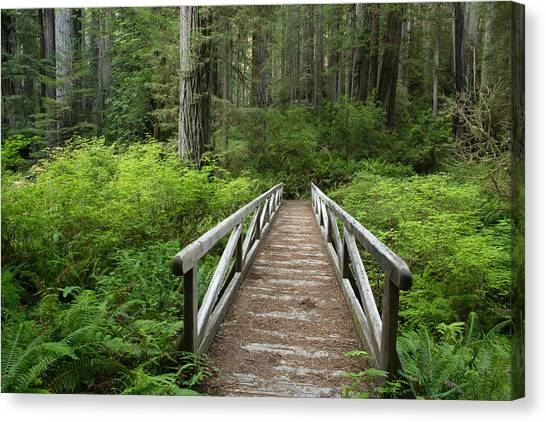 Redwood Forest Canvas Print - Footbridge by Eric Foltz