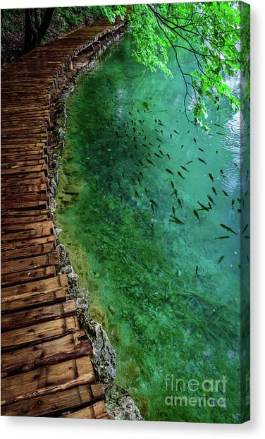 Footpaths And Fish - Plitvice Lakes National Park, Croatia Canvas Print