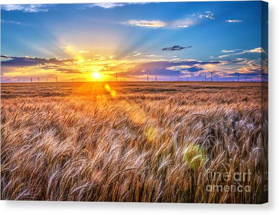 For Amber Waves Of Grain Canvas Print