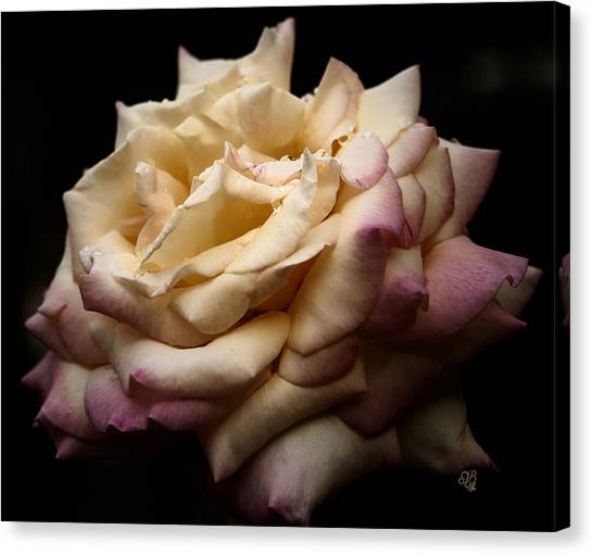 For Rose Lovers Canvas Print