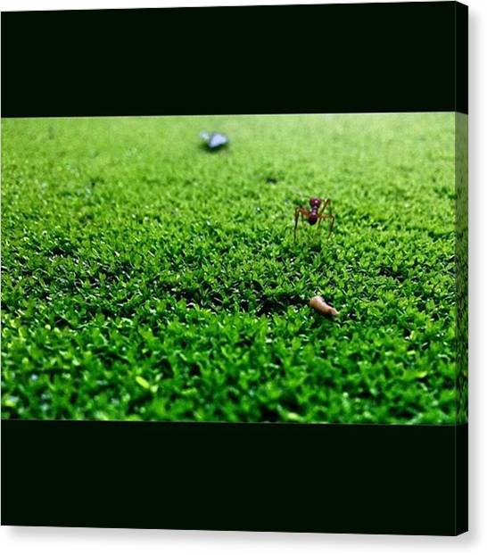 Ants Canvas Print - For Something Better  Nature Is Always by Jeff K Luna