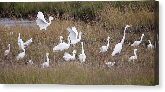 For The Birds I Canvas Print by Dawn J Benko