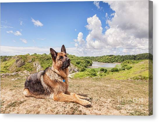 German Shepherds Canvas Print - For The Love Of Dogs by Colin and Linda McKie