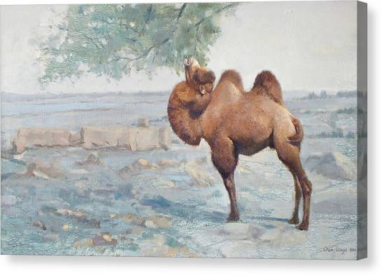 Camels Canvas Print - Foraging by Chen Baoyi