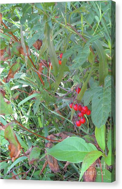 Minnesota Wild Canvas Print - Forbidden Fruit by Cheryle Gannaway