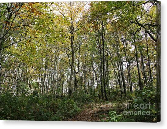 Forest Canopy Canvas Print