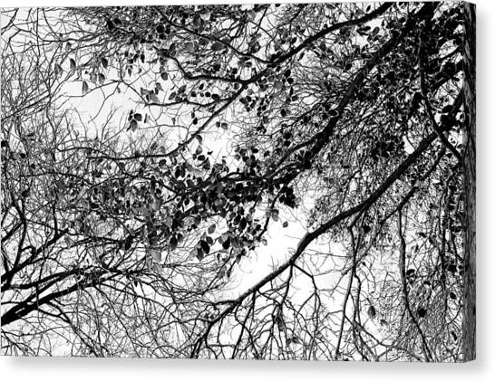 Birthday Gift Canvas Print - Forest Canopy Bw by Az Jackson