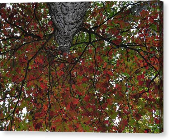 Forest Canopy Canvas Print by JAMART Photography