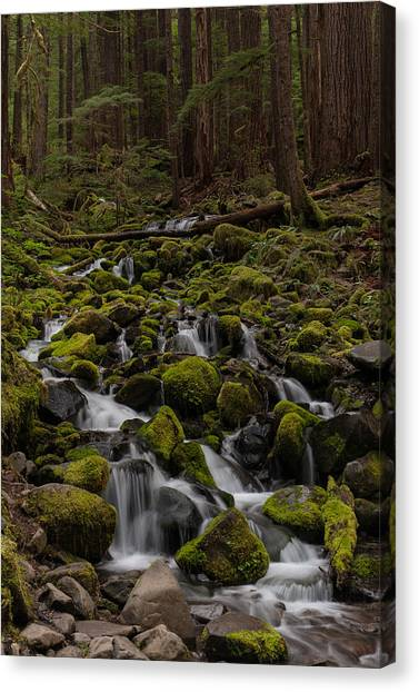 Olympic National Park Canvas Print - Forest Cathederal by Mike Reid