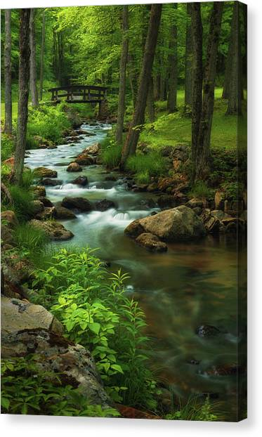 Forest Clearing Canvas Print