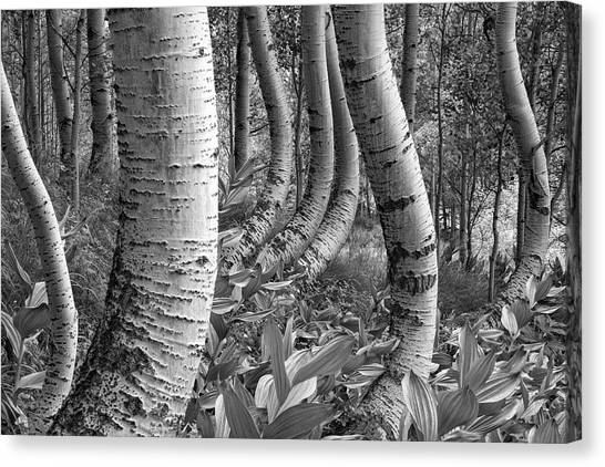 Forest Curves Canvas Print