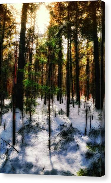 Forest Dawn Canvas Print