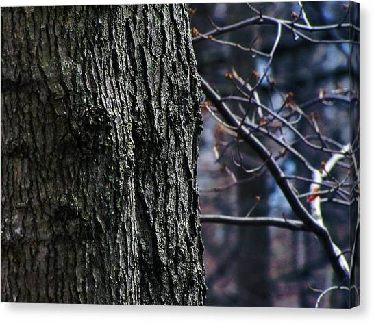 Forest Decor Canvas Print by Scott Hovind