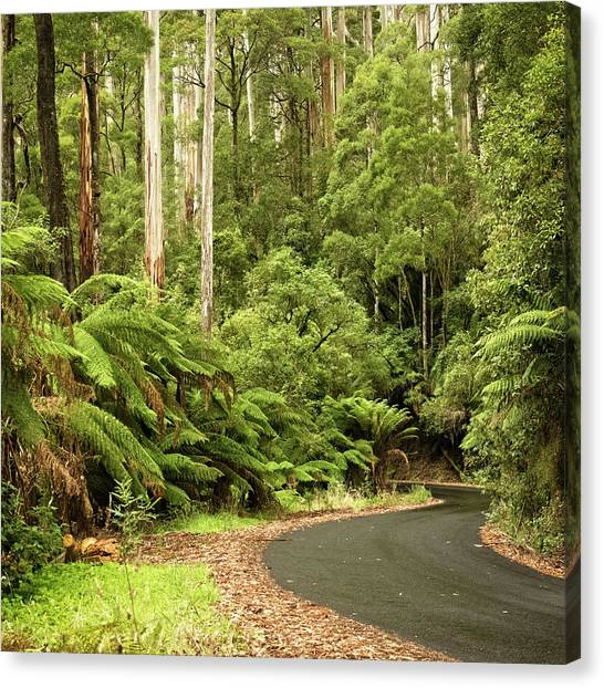 Great Otway National Park Canvas Print - Forest Drive by Catherine Reading