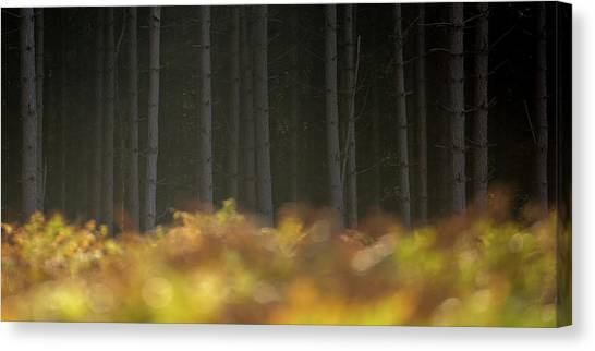 Sherwood Forest Canvas Print - Forest Fire by Chris Dale