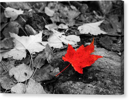 Forest Floor Maple Leaf Canvas Print