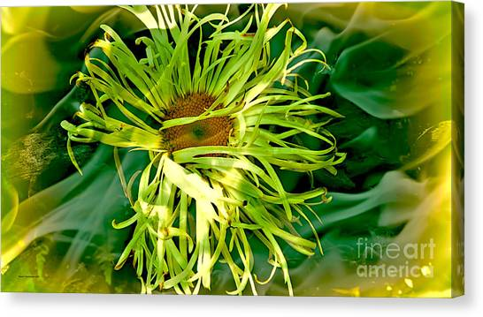 Forest Flower Canvas Print by Jason Christopher