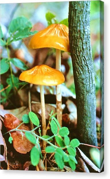 Forest Funji Canvas Print