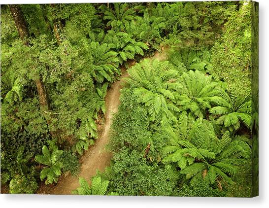 Great Otway National Park Canvas Print - Forest Green by Catherine Reading