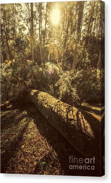 Fallen Tree Canvas Print - Forest In Fall by Jorgo Photography - Wall Art Gallery