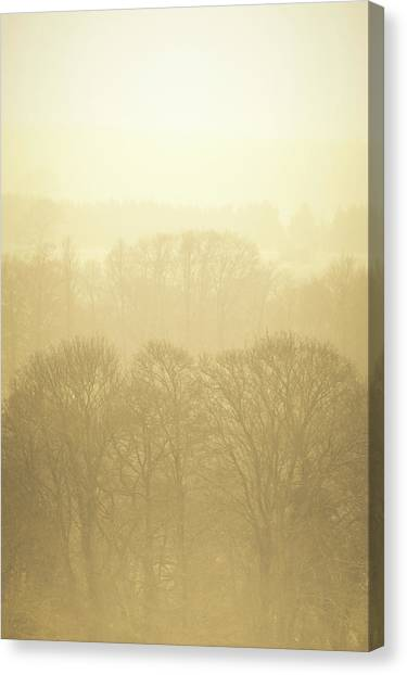 Canvas Print - Forest In The Mist 02 by Richard Nixon
