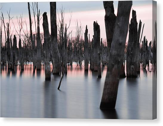 Forest In The Water Canvas Print