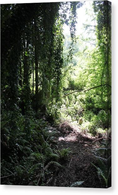 Forest Jungle Canvas Print