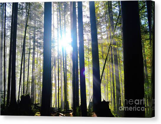 Forest Light Rays Canvas Print