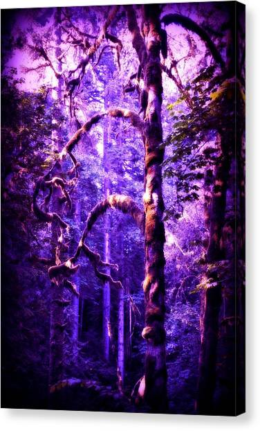 Mossy Forest Canvas Print - Forest Mist by Amanda Eberly-Kudamik