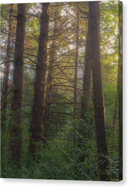 Redwood Forest Canvas Print - Forest Morning by Joseph Smith