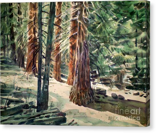Redwood Forest Canvas Print - Forest Murmers by Donald Maier