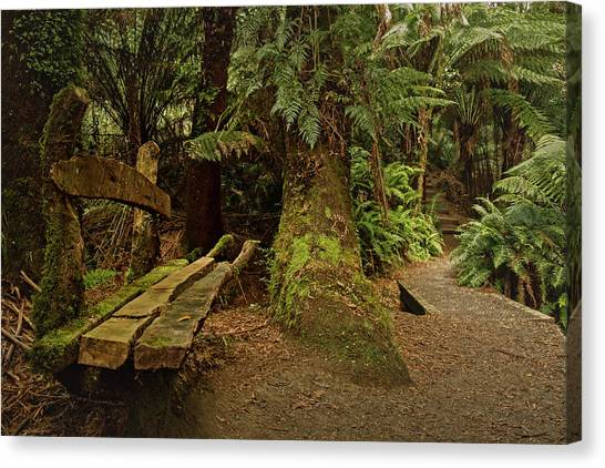 Great Otway National Park Canvas Print - Forest Oasis by Catherine Reading