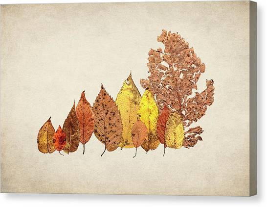 Decay Canvas Print - Forest Of Autumn Leaves II by Tom Mc Nemar