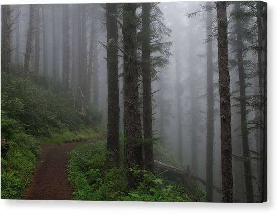 Forest Of Fog Canvas Print