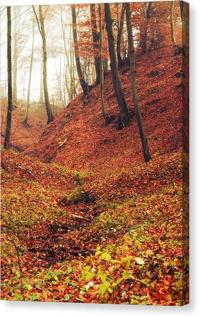 Fallen Leaf Canvas Print - Forest Of November by Art of Invi