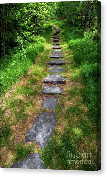 Forest Paths Canvas Print - Forest Path by Adrian Evans
