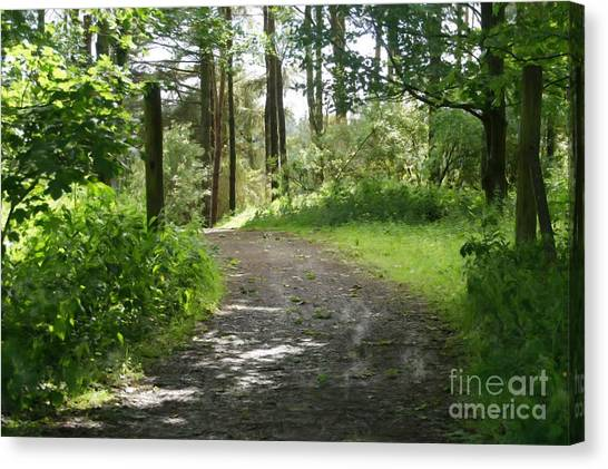 Forest Path. Canvas Print