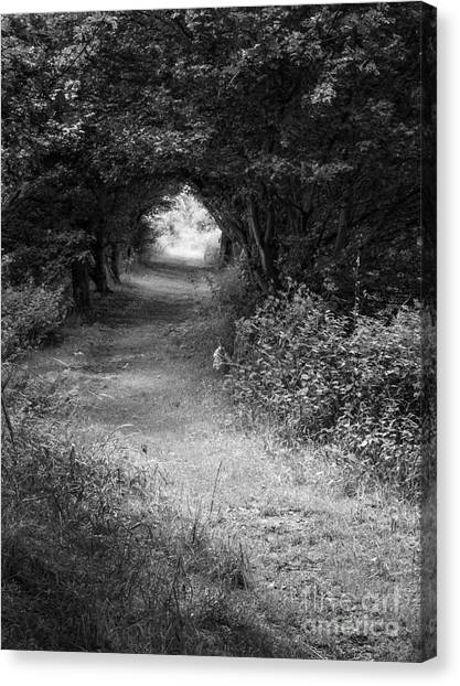 Weeping Willows Canvas Print - Forest Path by John Edwards
