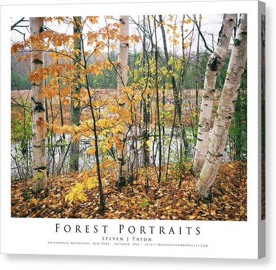 Forest Portraits Canvas Print by Steven Tryon