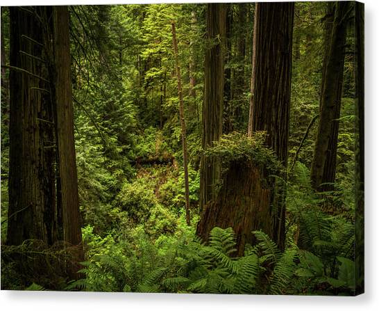 Forest Primeval Canvas Print