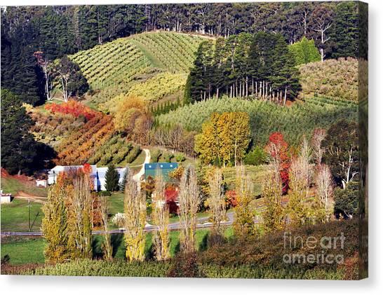 Forest Range, Adelaide Hills Canvas Print