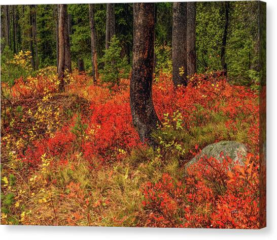 Boise National Forest Canvas Print - Forest Red by Lee Doyle