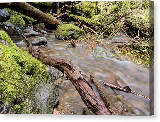 University Of Oregon Uo Canvas Print - Forest River Details by Margaret Pitcher